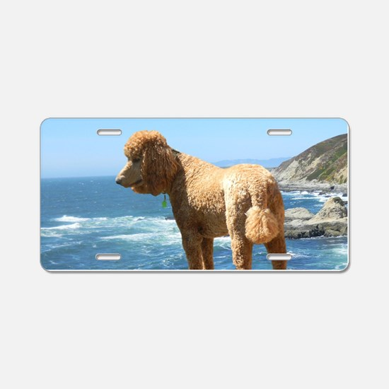 Cute Standard poodle Aluminum License Plate