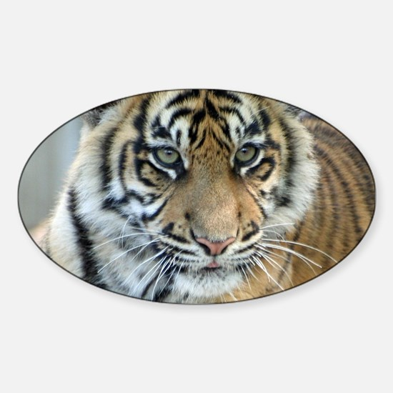 Tiger011 Decal
