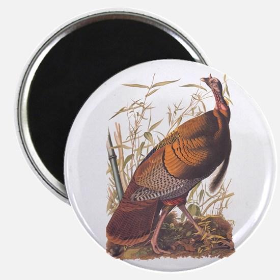 Audubon Wild Turkey Magnets