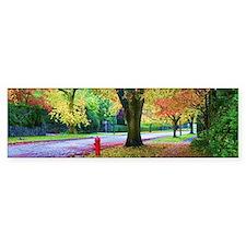 Autumn in Vancouver Sticker (Bumper)