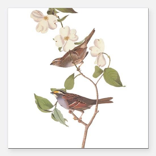 Audubon White Throated Sparrow Original Square Car