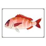 Red Porgy Banner