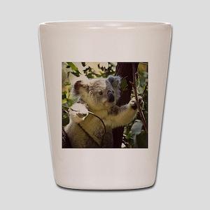 Sweet Baby Koala Shot Glass