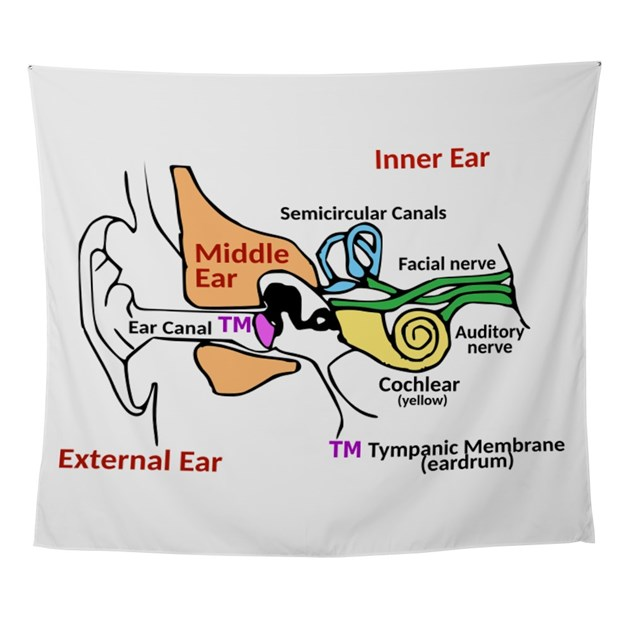 Ear diagram labeled wall tapestry by 1stopshoppingts ccuart Images