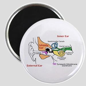 Ear Diagram labeled Magnet