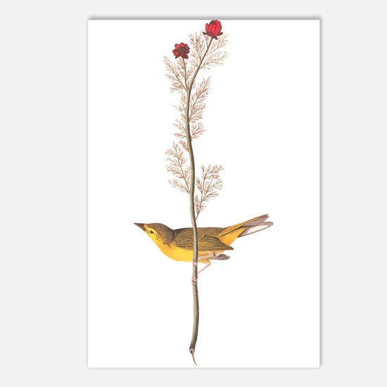 Audubon Selby's Fly Catch Postcards (package Of 8)