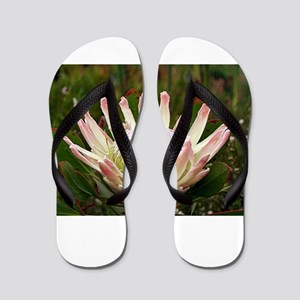 South African Protea flower in bloom in Flip Flops