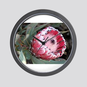 South Africa Protea flower in bloom in Wall Clock
