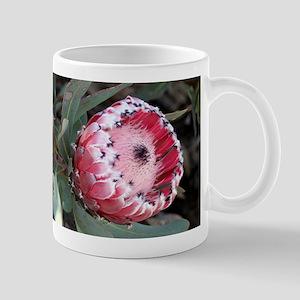 South Africa Protea flower in bloom in garden Mugs