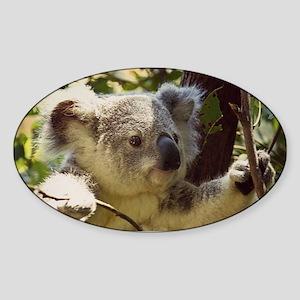 Sweet Baby Koala Sticker
