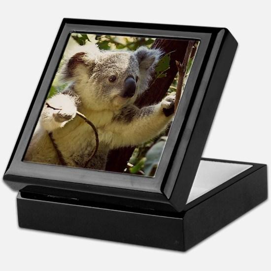Sweet Baby Koala Keepsake Box