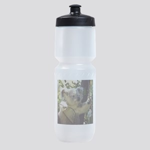 Sweet Baby Koala Sports Bottle