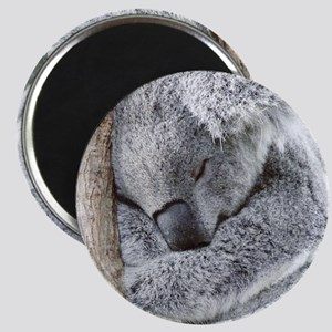 Sleeping Koala baby Magnets