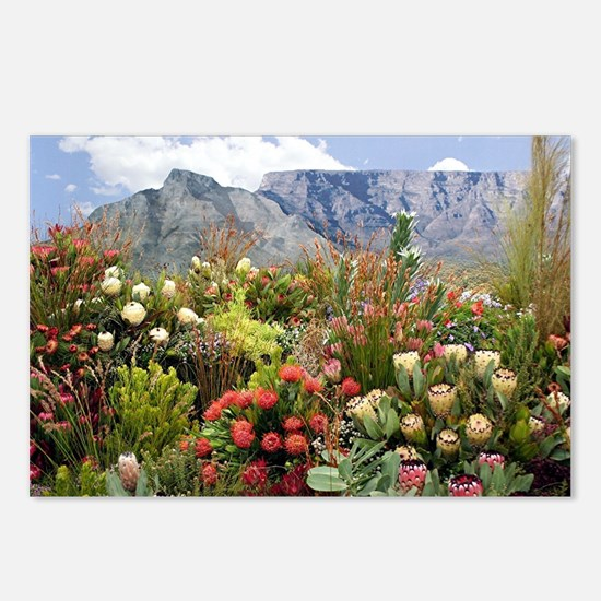 South African flower disp Postcards (Package of 8)