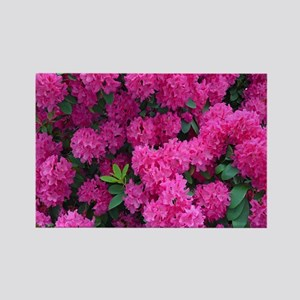 Pink rhododendron flowers Magnets