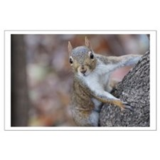 Juvenile Squirrel Up A Tree Posters