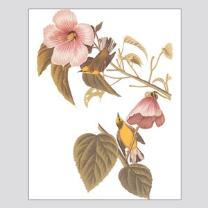 Audubon Blue Winged Yellow Warbler Posters