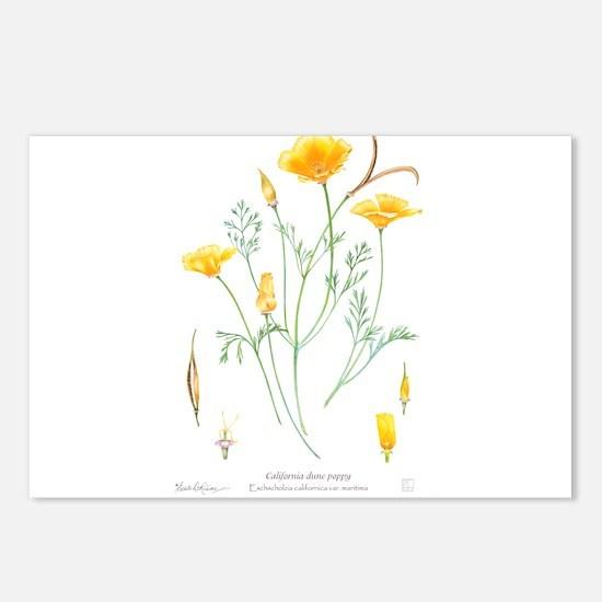 California dune poppy (Eschscholzia californica) P