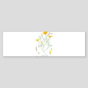 California dune poppy (Eschscholzia californica) B