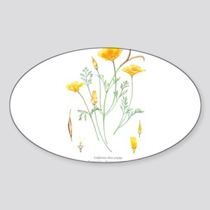 California dune poppy (Eschscholzia californica) S