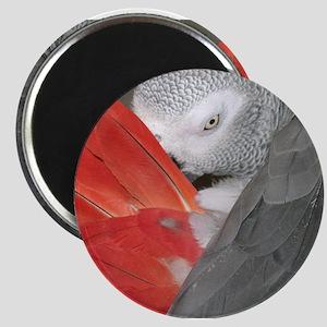 Elegant Grey Magnets