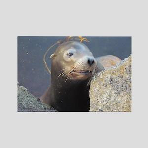 Sea Lion Having Fun Magnets