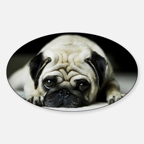 Pug Puppy Decal