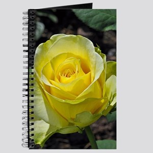 Singe yellow rose in sunlight Journal