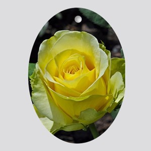 Singe yellow rose in sunlight Ornament (Oval)