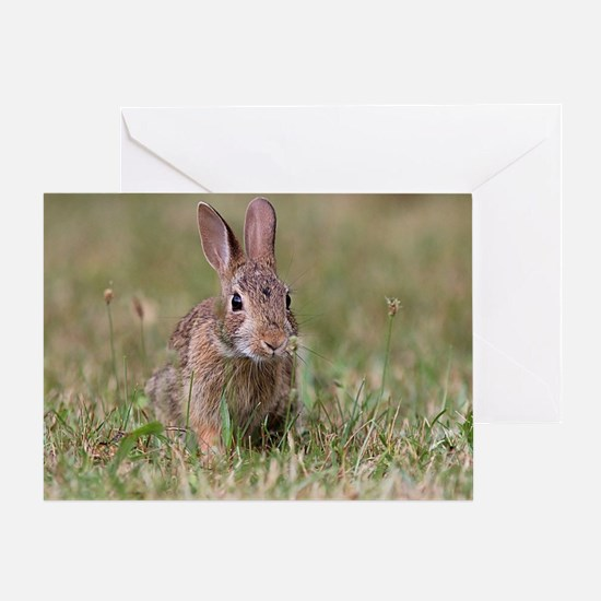Unique Wild rabbit Greeting Card