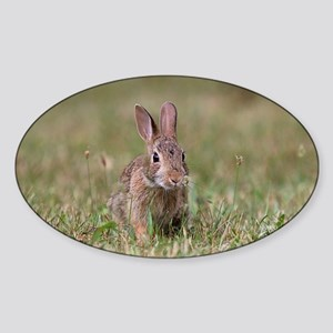Cottontail Rabbit Sticker