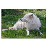 White Wolf Large Poster