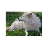 White Wolf Rectangle Magnet (100 pack)