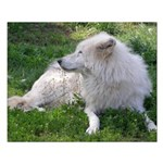 White Wolf Small Poster