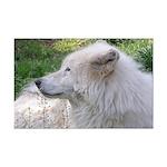 White Wolf Mini Poster Print #2