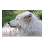 White Wolf Postcards (Package of 8) #2