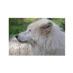 White Wolf Rectangle Magnet (100 pack) #2