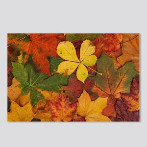FALL LEAVES Postcards (Package of 8)