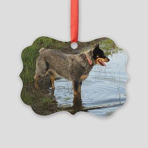 Austrailan Blue Heeler Picture Ornament
