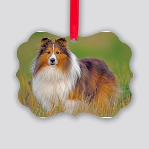 Shetland Sheepdog 01 Picture Ornament