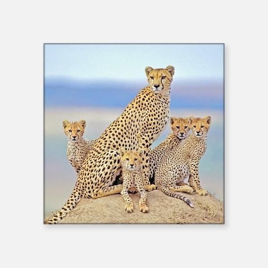 "Cheetah Family Square Sticker 3"" x 3"""