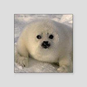 "Baby Seal Square Sticker 3"" x 3"""