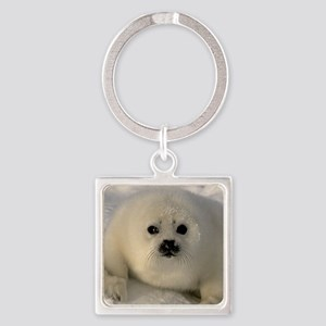 Baby Seal Square Keychain