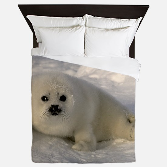 Baby Seal Queen Duvet