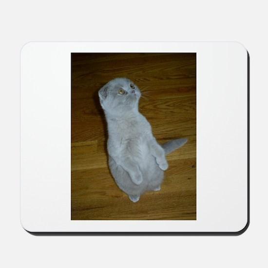 lilac Scottish Fold kitten Mousepad