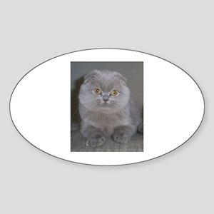 lilac Scottish Fold cat Sticker