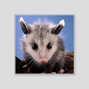 Cute Opossum Sticker