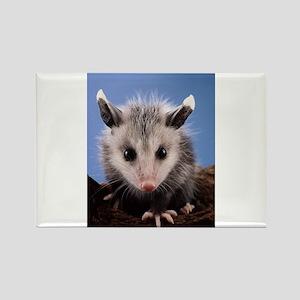 Cute Opossum Magnets