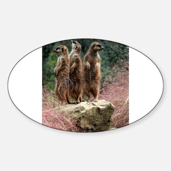 Meerkats On A Rock Decal