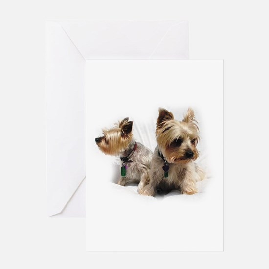 Silky Terriers Greeting Cards